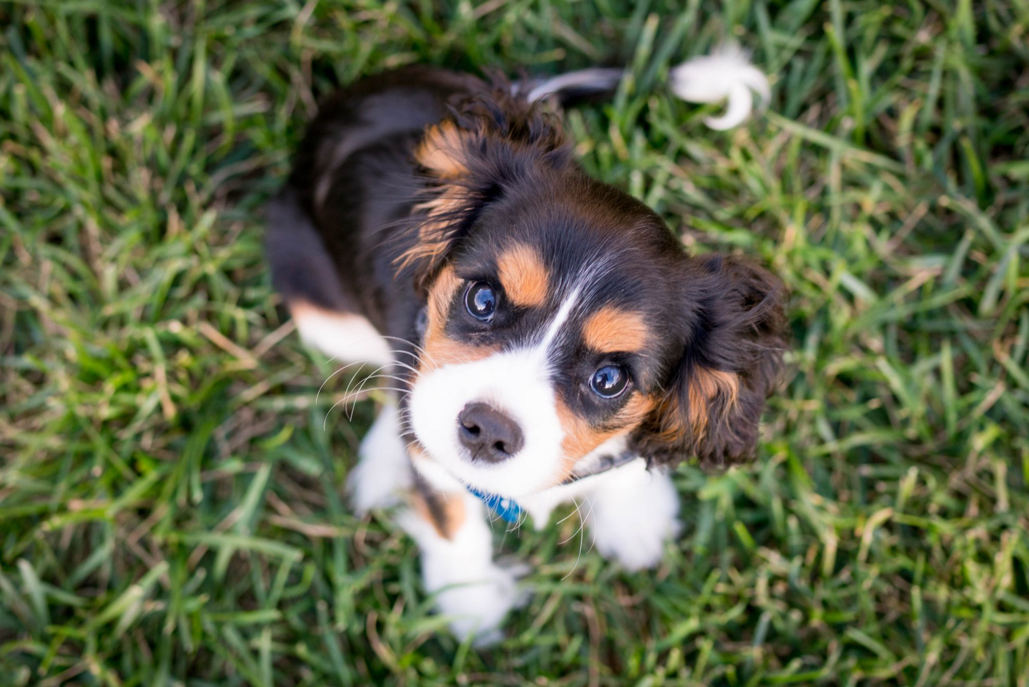 5 Major Myths About Puppy Food