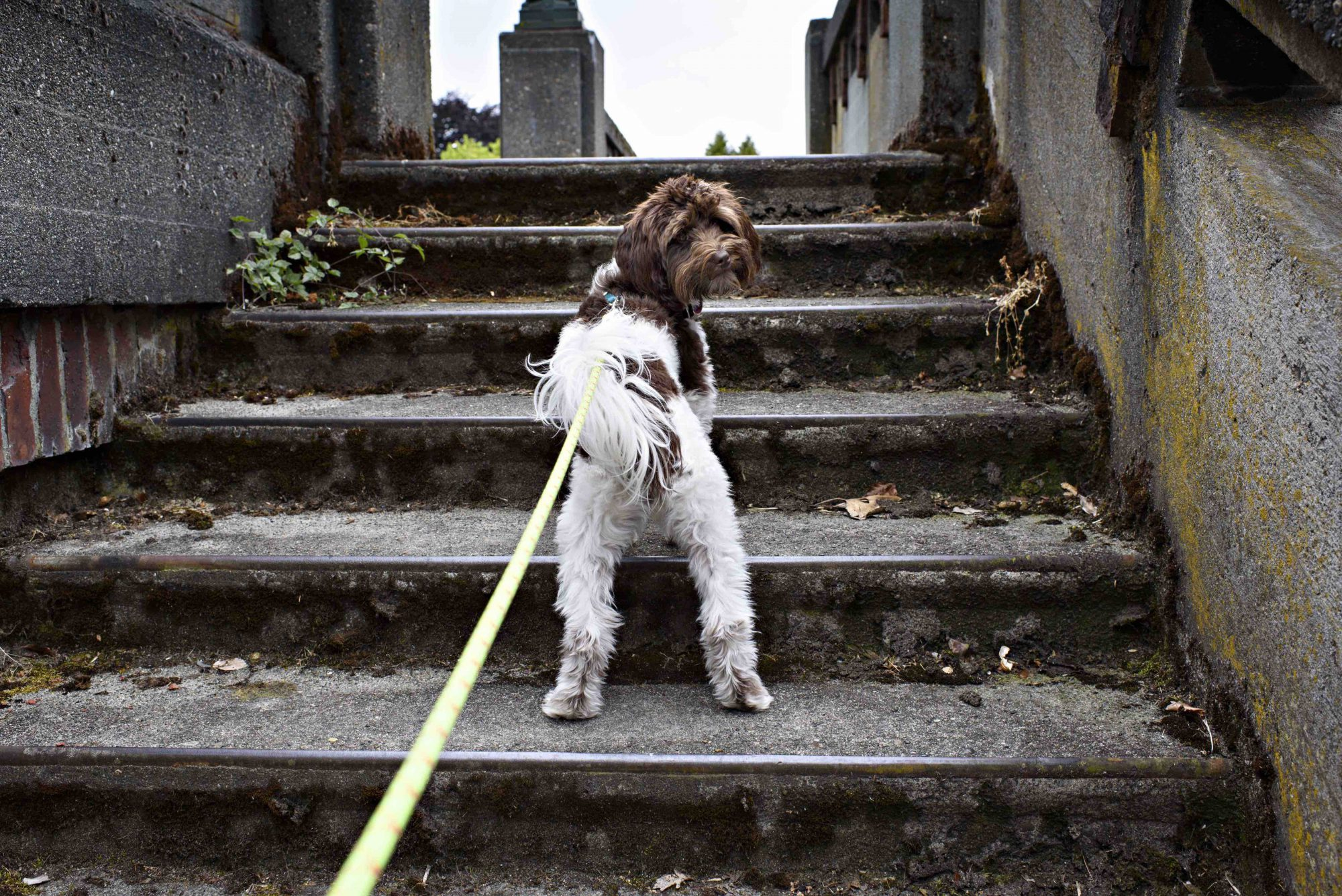 Guarding Against Arthritis In Dogs: Awareness And Weight Are Key