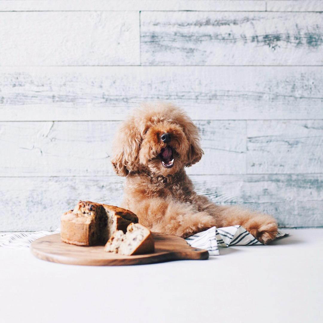The Truth About Table Scraps for Dogs